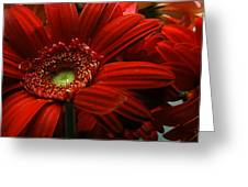 Red Floral Greeting Card