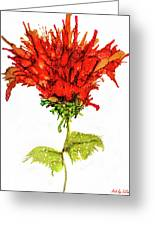 Red Flower 2 Greeting Card