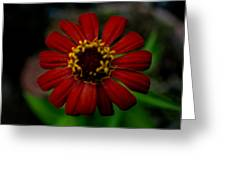 Red Flower 8 Greeting Card