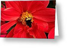 Red Flower And Bee Greeting Card