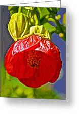 Red Flower At Pilgrim Place  In Claremont-california Greeting Card