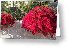 Red Flower Bushes Greeting Card