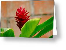 Red Flower IIi Greeting Card