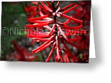 Red Flower Under The Light Of The Setting Sun Greeting Card