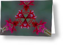 Red Flowers Abstract Greeting Card