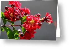 Red Flowers After The Rain Greeting Card