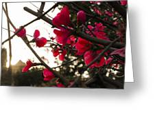 Red Flowers At Sunset Greeting Card