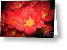Multiple Red Flowers In Bloom Greeting Card