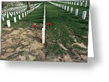 Red Flowers In Arlington Greeting Card