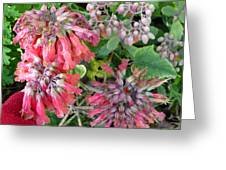 Red Flowers Like Snowflakes Greeting Card