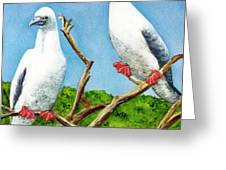 Red Footed Booby #255, Greeting Card