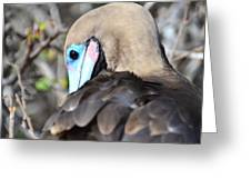 Red Footed Booby Greeting Card