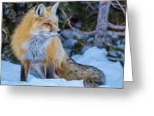 Red Fox At Dawn In Winter Greeting Card