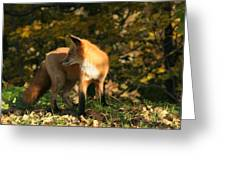 Red Fox In Shadows Greeting Card