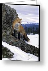 Red Fox In The Mountains Greeting Card