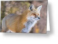 Red Fox In Winter Glow Greeting Card