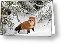 Red Fox In Winter Greeting Card
