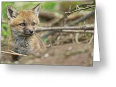 Red Fox Kit Greeting Card by Everet Regal