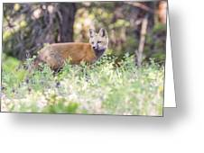 Red Fox Kit Looking For Mom Greeting Card