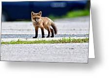 Red Fox Kit On Road Greeting Card