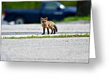 Red Fox Kit Standing On Old Road Greeting Card