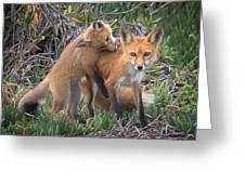 Red Fox Mama's Love Bite Greeting Card