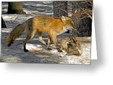 Red Fox Mommy And The Cutest Puppy Greeting Card