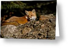 Red Fox Pictures 126 Greeting Card