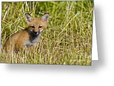Red Fox Pictures 19 Greeting Card