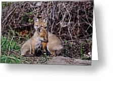 Red Fox Pictures 65 Greeting Card