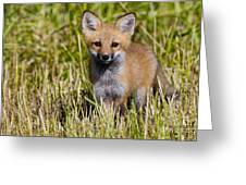 Red Fox Pictures 7 Greeting Card