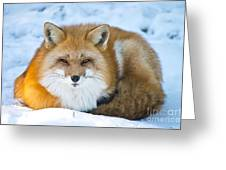 Red Fox Pictures 98 Greeting Card