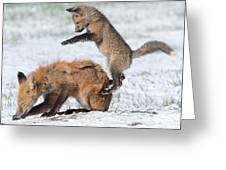 Red Fox Pounce Greeting Card
