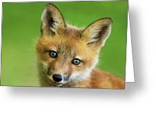 Red Fox Pup Greeting Card
