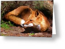 Red Fox Resting Square Greeting Card