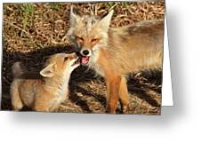 Red Fox Vixen With Pup On Hecla Island In Manitoba Greeting Card