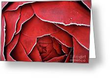 Red Frosty Metal Rose Greeting Card