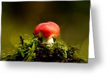 Red Fungus Greeting Card