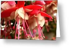 Red Fuschia Greeting Card
