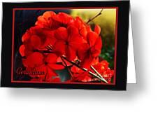 Red Geranium Greeting Card