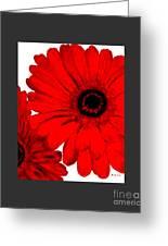 Red Gerber Border     Digital Art  Greeting Card