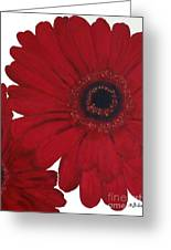 Red Gerber Daisy Greeting Card by Marsha Heiken