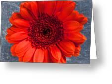 Red Gerbera Greeting Card