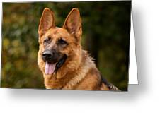 Red German Shepherd Dog Greeting Card