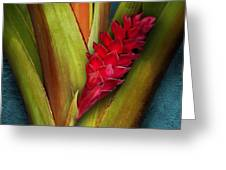 Red Ginger Window Greeting Card