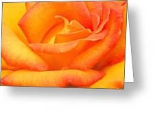 Red Gold Rose Greeting Card