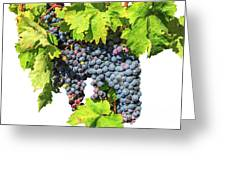 Red Grapes Seasonal Background Greeting Card