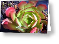 Red Green Succulent Greeting Card