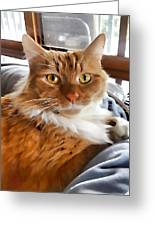 Red-haired Kitten Greeting Card
