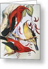 Red Hawaiian Honeycreeper Greeting Card